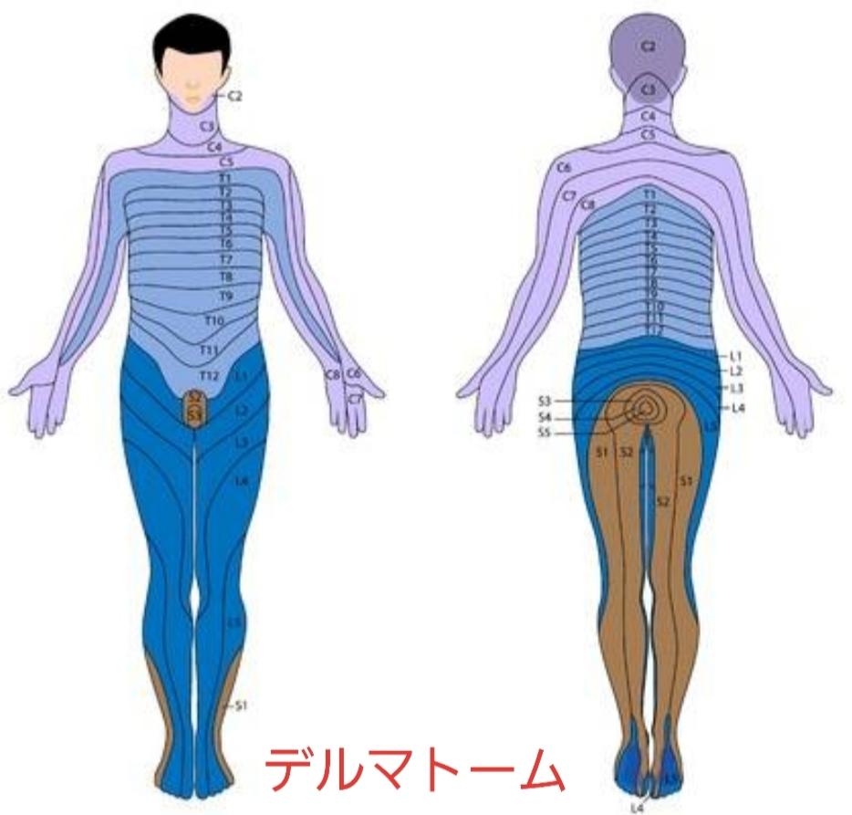 と の 痛み 左 背中 胸